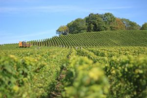 Ideal Wine Company new zealand wine