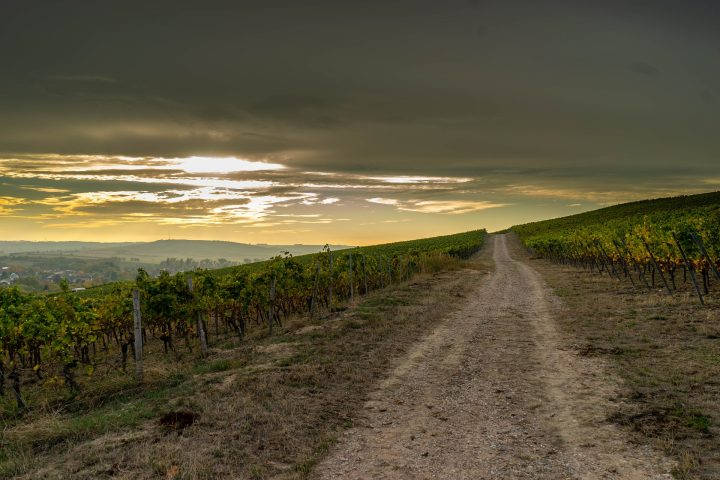How will climate change affect the wine industry?